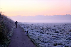 Walking the Dog (Explore) (Anthony Beyga) Tags: dog mist sunrise frost walkingthedog liverpoolecho croxtethpark anthonybeyga