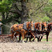 4 horse power clod buster. Photo: Bill Herrick, Indian Lake