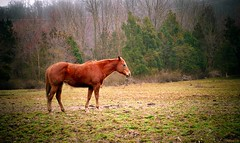 GRACE (a2roland) Tags: a2roland a2rolandyahoocom norman zeb horse stag stallion steed pony graze field farm orange red pa pennsylvania nj landscape photo flickr © photography all rights reserved