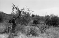 1088.Dsolation (Greg.photographie) Tags: blackandwhite bw film analog 35mm noiretblanc lucky miranda sensorex 24x36