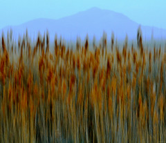 Pulled Reeds (Karen McQuilkin) Tags: abstract evening utah spring windy antelopeisland grasses impressionist icm wasatchmountains intentionalcameramovement karenandmc pulledreeds