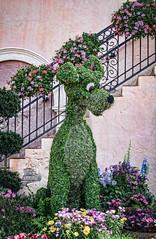 Lady and the Tramp (BaraChouinard) Tags: italy epcot topiary florida waltdisneyworld flowersplants worldshowcase flowergardenfestival ladyandthetramp internationalflowerandgardenfestival