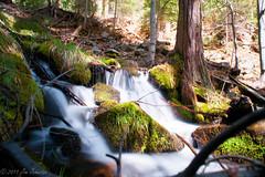 Nelder Creek Falls