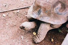 IMG_3292 (Whitney Chen) Tags: world travel beautiful animal animals landscape paradise turtle places wanderlust explore abroad mauritius travelblog chamarel travelphotography gianttortoise