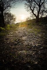 Sunset on path (nijachem01) Tags: sunset wild forest kent woods rocks path canterbury flare wilderness footpath gravel sunflare xe1
