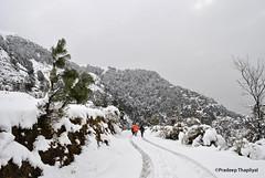 _DSC1496 (Pradeep Thapliyal) Tags: india mountain snow ice weather outdoor hill snowstorm snowfall himachal bir badweather hillstation pradesh himachalpradesh pragliding biling walkingonsnow birbiling