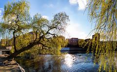 Spring checklist: Willow (Ulf Bodin) Tags: easter spring sweden willow sverige norrkping pil vr salix psk motalastrm piltrd stergtlandsln canonef24mmf14liiusm canoneos5dmarkiii