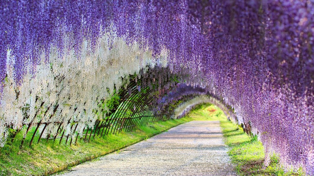 Ashikaga Flower Park 2