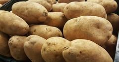 """Die Kartoffel. Die Kartoffeln. Bei Wörtern mit -el ist der Plural häufig -eln. Beispiele: Nudeln Zwiebeln etc. • <a style=""""font-size:0.8em;"""" href=""""http://www.flickr.com/photos/42554185@N00/26430684784/"""" target=""""_blank"""">View on Flickr</a>"""