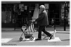 Walking the dogs. (MAMF photography.) Tags: road uk greatbritain england people blackandwhite bw dog dogs monochrome town photo blackwhite google nikon flickr noir noiretblanc zwartwit unitedkingdom britain yorkshire negro north gb upnorth zwart pretoebranco schwarz biancoenero westyorkshire onthestreet dogwalking morley greatphoto googleimages northernengland enblancoynegro zwartenwit greatphotographers ls27 mamf inbiancoenero d7100 schwarzundweis morleyleeds nikond7100 mamfphotography