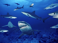 Underwater sea creatures and other animals Wallpapers | SEA LIFE Adventure Backgrounds - Part 8 (PhotographyPLUS) Tags: pictures graphics photos illustrations images stockphotos articles footage stockimage freephoto stockphotograph