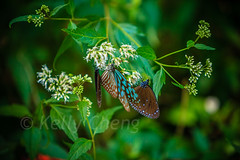 Taiwan-121113-275 (Kelly Cheng) Tags: travel color colour green tourism nature animals horizontal fauna butterfly daylight colorful asia day taiwan vivid nobody nopeople colourful traveldestinations  northeastasia