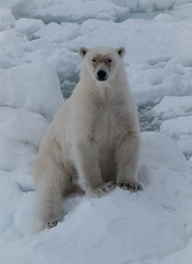 P1110848 (Craig Hemsath) Tags: snow nature norway lumix panasonic svalbard arctic micro g6 43 linblad 1235 expeditions mirrorless