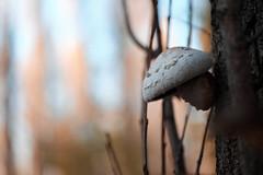 DSCF7356 (Evren Unal Photography) Tags: sky macro tree green love mushroom field closeup zeiss 50mm alone dof bokeh fujifilm leafs depth mantar carlzeiss touit2850m