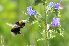 Macro 2_ (Ivo Markes) Tags: macro nikon ape fiori fiore