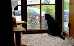 Cat (Eat.myphoto) Tags: black window animal cat