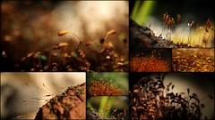 On one square meter... (ElsjeD) Tags: nature garden moss natuur tuin mossen compilatie onesquaremeter nvierkantemeter samsungnx300