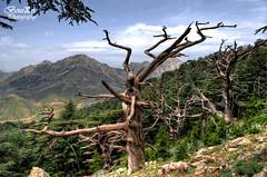 Tikjda -Kabylie Algrie (imazighen_amazigh) Tags: nature nikon arbres algrie cdre d5100