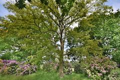Swiss Garden Tree (Bri_J) Tags: uk garden nikon bedfordshire swissgarden shuttleworthcollection oldwarden d7200