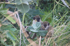 "Primates • <a style=""font-size:0.8em;"" href=""http://www.flickr.com/photos/57634067@N04/6783228252/"" target=""_blank"">View on Flickr</a>"