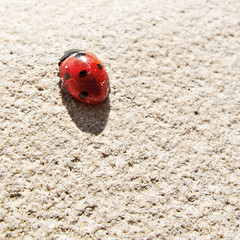 Red passion (Gianlucamonaco) Tags: red animal lady bug monaco passion ladybug rosso passione g11 gianluca coccinella isia
