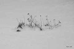 Winternature (Ken-Zan) Tags: vinter sn kenzan kartpostal strn ljunghav