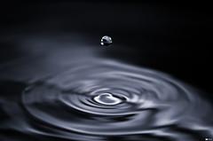 Droplet [Explore 2012-02-16, Frontpage] (Daniel Wildi Photography) Tags: water monochrome beauty switzerland drop falling droplet simple 2012 rubigen cantonofbern danielwildiphotography