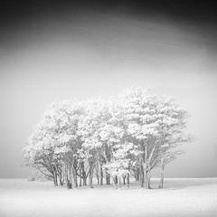 The bunch (c e d e r) Tags: sky bw white mist black art fog square landscape photography sweden fine jens infrared malm malmo ceder black white bw