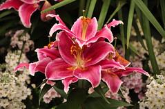 Logwood Gardens (PMillera4) Tags: flowers nikon longwoodgardens