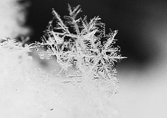 Snow crystals..... (TinyAcorn) Tags: blurred infocus mediumquality elementsorganizer