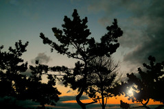 Before Dark (floralgal) Tags: trees sunset beach nature clouds dusk branches drama dramaticsky ryenewyork westchestercountynewyork miltonpoint
