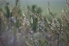 (c-or^^) Tags: light nature grass licht gras pentax55300 pentaxkr