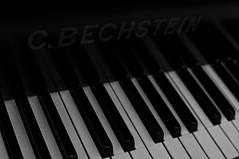 C.Bechstein Grand Piano (Amit-M) Tags: bw white black composition keys keyboard piano grand cbechstein