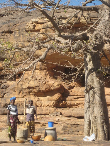 Women working in Dogon Country under a Baobab
