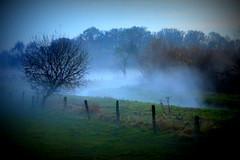 fairy tale (redglobe*) Tags: mist tree nature weather fog germany lomo nebel natur vignetting mystic münster