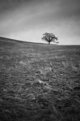 Lonely tree in field (Xiphoid8) Tags: blackandwhite bw tree oak sanjose isolation minimalism oaktree singletree lonetree mthamilton mounthamilton josephdgrant josephdgrantcountypark blackwhitephotos californiavalleyoak josephdgrantcountyparkca valleyoaktree eastofsanjose