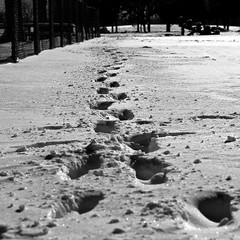 Petits pas dans la neige (bob august) Tags: winter bw square blackwhite nikon montréal noiretblanc hiver 2012 carré février villeray d90 parcjarry aperture3