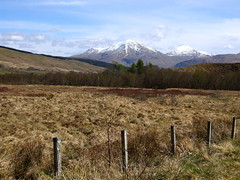 Dalrigh (nz_willowherb) Tags: pine forest scotland ancient scots caledonian remnant strathfillan coillecoirechuilc connonish
