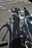 (Laser Burners) Tags: nyc newyorkcity brooklyn cycling shadows bikes bicycles citynoise