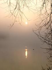 Matin pastel * (Titole) Tags: mist reflection fog sunrise pastel brouillard brume leverdesoleil explored friendlychallenges titole nicolefaton