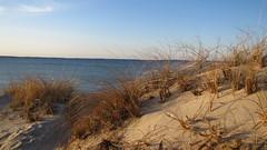 IMG_5340 (Martina Mastromonaco) Tags: beach vineyard martha s subset