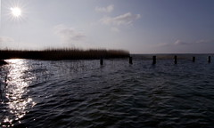 Gegen die Sonne blinzeln - Blinking against the sun (Manuela Salzinger) Tags: sea meer balticsea ostsee zingst bodden fischlanddarsszingst fuhlendorf