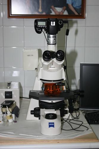 "Jóvenes de la ESO estudian la biodiversidad microbiana • <a style=""font-size:0.8em;"" href=""http://www.flickr.com/photos/61278771@N07/13981779912/"" target=""_blank"">View on Flickr</a>"
