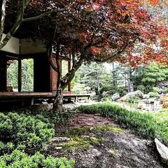 philadelphia #japanesehouse #teahouse #spring #fairmount #spring... (someguyinphilly) Tags: philadelphia beautiful spring fairmount teahouse japanesehouse shofuso uploaded:by=flickstagram instagram:venue=752840 instagram:photo=1250970197818705475186691376 instagram:venuename=shofusojapanesehouseandgarden