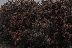 """J155/365  """"Temple of flowers"""" (manon.ternes) Tags: voyage pink mer paris love colors rose fleurs project landscape photography student poetry photographie photos couleurs bretagne 365 paysage campagne challenge personne projet parisienne tudiante potique 365days 365project projet365"""