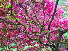 Japanese garden 9 (Frans Schmit) Tags: japanesegarden denhaag thehague clingendael japansetuin fransschmit
