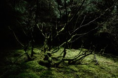 Spooky Glade (D-W-J-S) Tags: trees forest scotland spooky