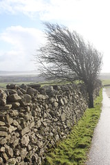 Cumbrian Hill Tree (1st Englishgent) Tags: england lakes northern cumbrian