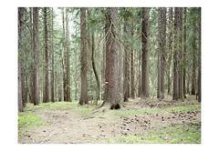 (harald wawrzyniak) Tags: tree mamiya austria woods kodak medium format harald portra 120mm styria 2016 645af wawrzyniak
