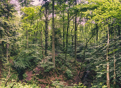 In the Woods (Falcdragon) Tags: trees panorama water forest walking woods stream belgium weekend be lige gully rgionwallonne sonyrx100mk128100mmf1849